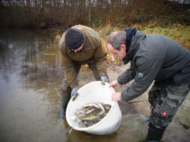 Aktuelles for Fischbesatz teich